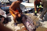 shark fishing in Alanya